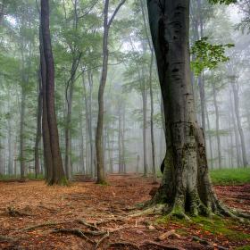 Sám v lese