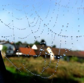 Slzy pavouka