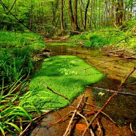 Krásy potoka