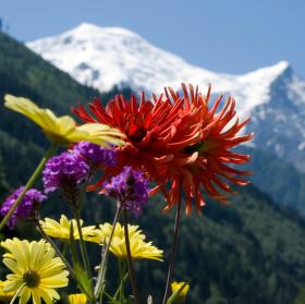 kvetiny v Chamonix