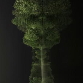 Lesní zvíře