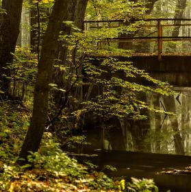 Lužní les XV - Přírodní rezervace Polanský les