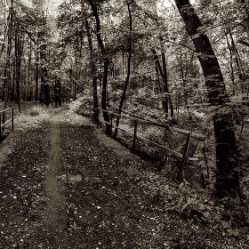 Lužní les XVI - Přírodní rezervace Polanský les