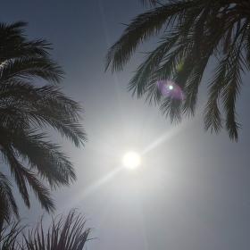Palmy pod sluncem
