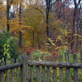 podzim za plotem