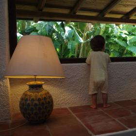 Za oknem džungle svět