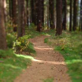Cestička lesem