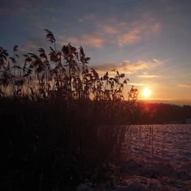 Ráno na zasněžené louce