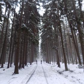 Cesta stromy