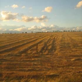 Pohled z okna vlaku.
