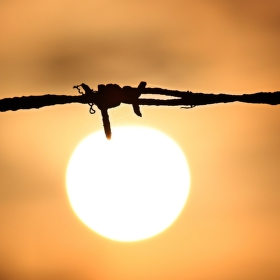 Slunce žhaví drát...