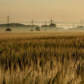 ČEZké pole