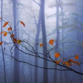 Šepot podzimního listí