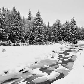 Černobílost zimy