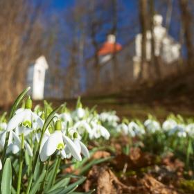 Jaro v Mladé Vožici