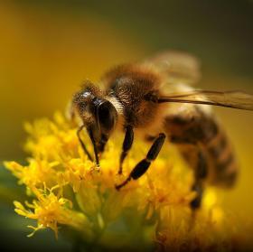 Včela 3