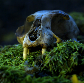 Esprit de la forêt-Duch lesa