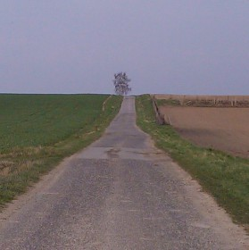 Cesta