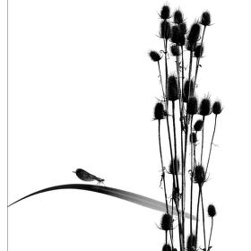 čierne na bielom: drobné tajomstvá prírody