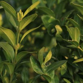 Zelený keřík