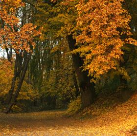 Podzim v úvozu