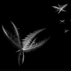 nocni motyli