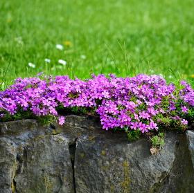 jaro na záhradě