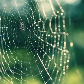Ráno, slunce a pavoučí síť... a kde je pavouk?