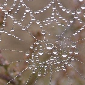 Podzim perly vetkal do pavoučí sítě