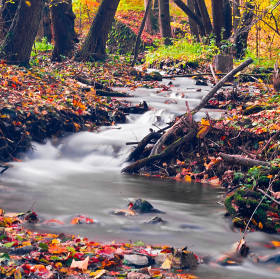 Kouzla podzimu