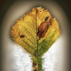 Fragment podzimního listu kaštanu