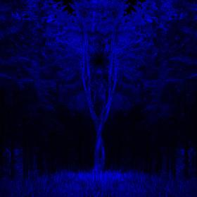 Noční  dravec