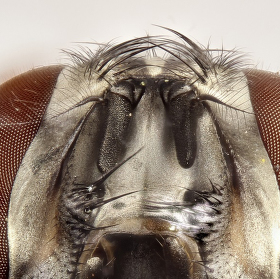 Jedna muší :-) foceno reverzně 17-55mm složeno z 180 foto