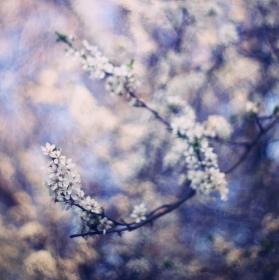 Jarní malování