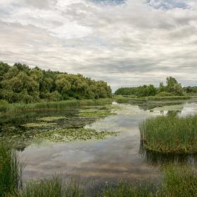 Kis-Balaton, ptačí rezervace