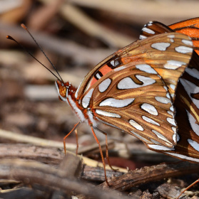 motyli chvilka