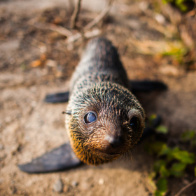 Super baby seal