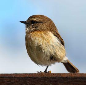 Reunionský ptáček 2