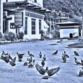 Klášterní holubi