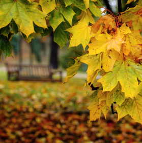 Podzim v parku