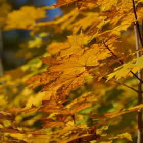 Perspektiva podzimu