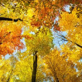 Podzimní romance ....