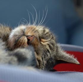 Odpolední siesta