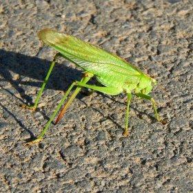 Zelené stvoření