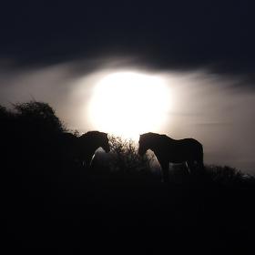 Na večerní pastvě