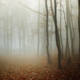 podzimní tajemno