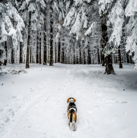 Pes na horách