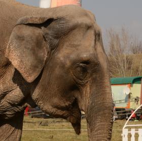 Slon ...
