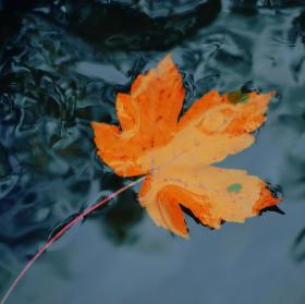 Plavoucí podzim