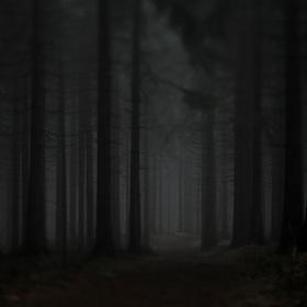 v temném lese